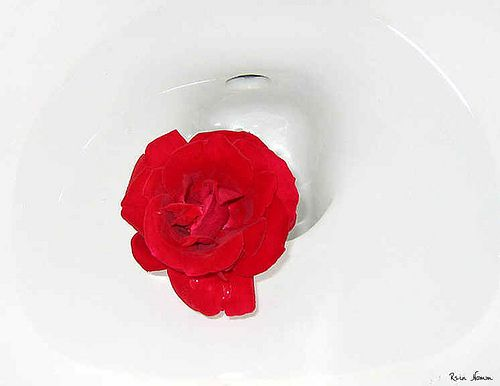 A Rose for Duchamp by Rein Nomm