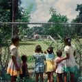 Black Children look into a 'White Only'  Park in 1956