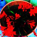 Blood red flowers
