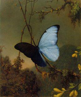 Blue Morpho Butterfly, c. 1864-1865 — Heade