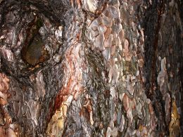 Colours of the Tree Bark by *GraceYinPingLung on deviantART