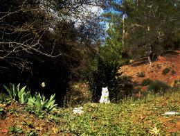 fleeting moment -Trodos Mountains