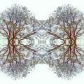 Gillon Stephenson -- winter trees in London.