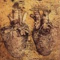 LEONARDO da Vinci- Heart and its Blood Vessels - Drawing Biblioteca Ambrosiana, Milan .