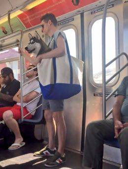 Subway - Man with Dog in Bag