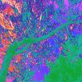 TREES XX