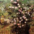 Vincent van Gogh:   Rosebush in Blossom, 1889