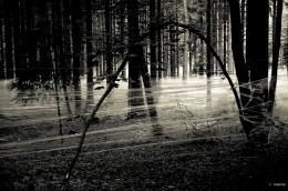 Zwischenwelt Black and White 3